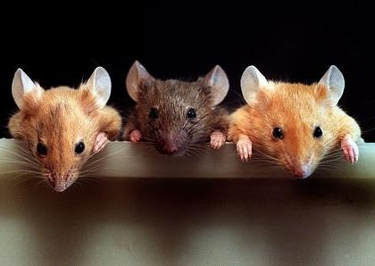 В Казахстане мыши пробрались в банкомат и сгрызли все деньги (Видео)