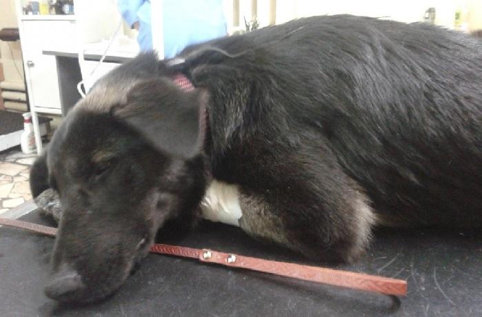 Для лечения собак при отравлении крысиным ядом