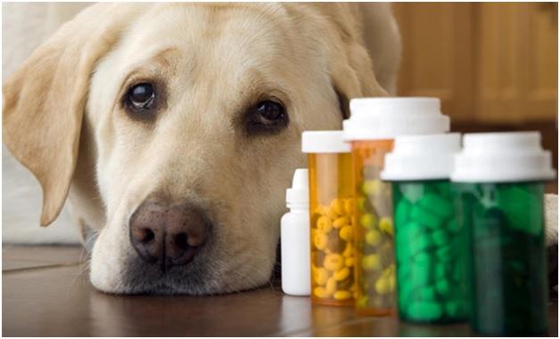 Лечить отравление собаки в домашних условиях