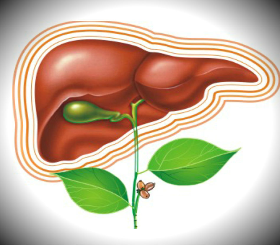 Препараты для улучшения работы печени и поджелудочной железы
