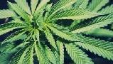 Передозировка марихуаной