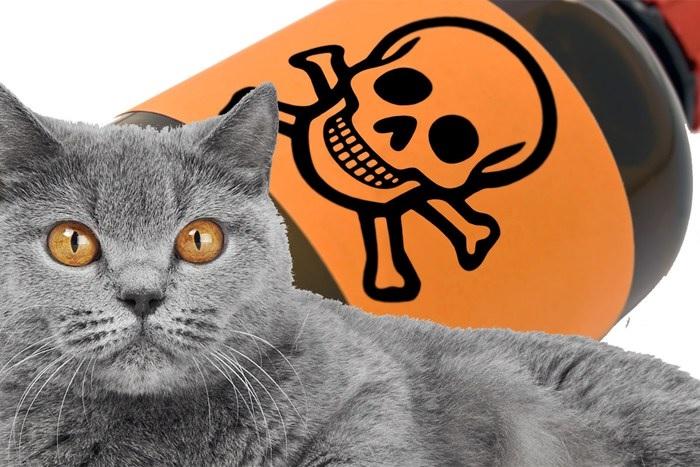 Ядом для кошки