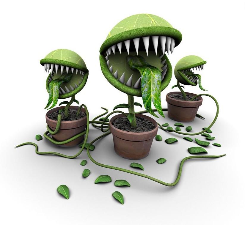 отравление ядовитыми растениями и грибами реферат