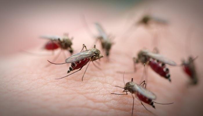 Зуд от укуса комара
