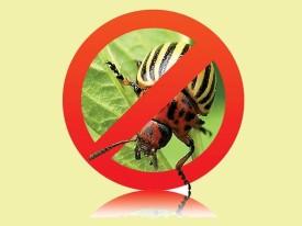 Отравление колорадского жука