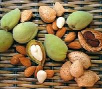 Миндальный орех: вред и польза