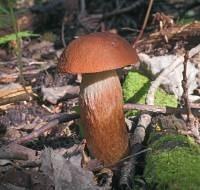 Отравление белыми грибами