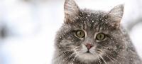Отравление кошек