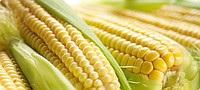 Отравление кукурузой