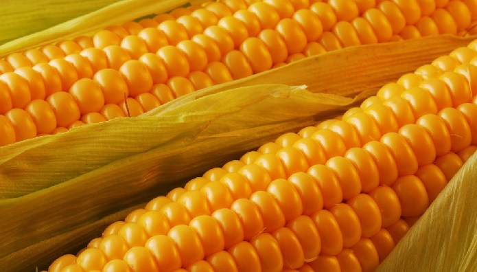 Отравиться кукурузой можно