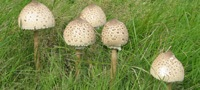 Помощь при отравлении грибами