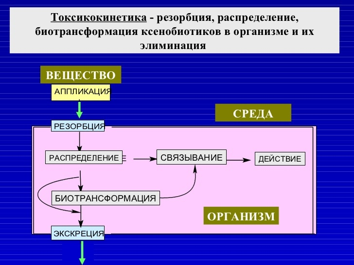 Токсикокинетика