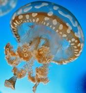 Симптомы укуса медузы