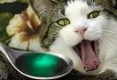 Смертельно опасные яды для кошек